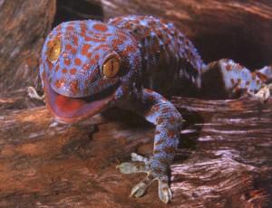 In de film Spider-Man wordt de wetenschap van Geckokleefkracht gebruikt